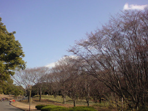 20110126124607